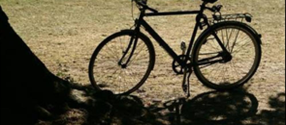 train-bike-trip-295x195